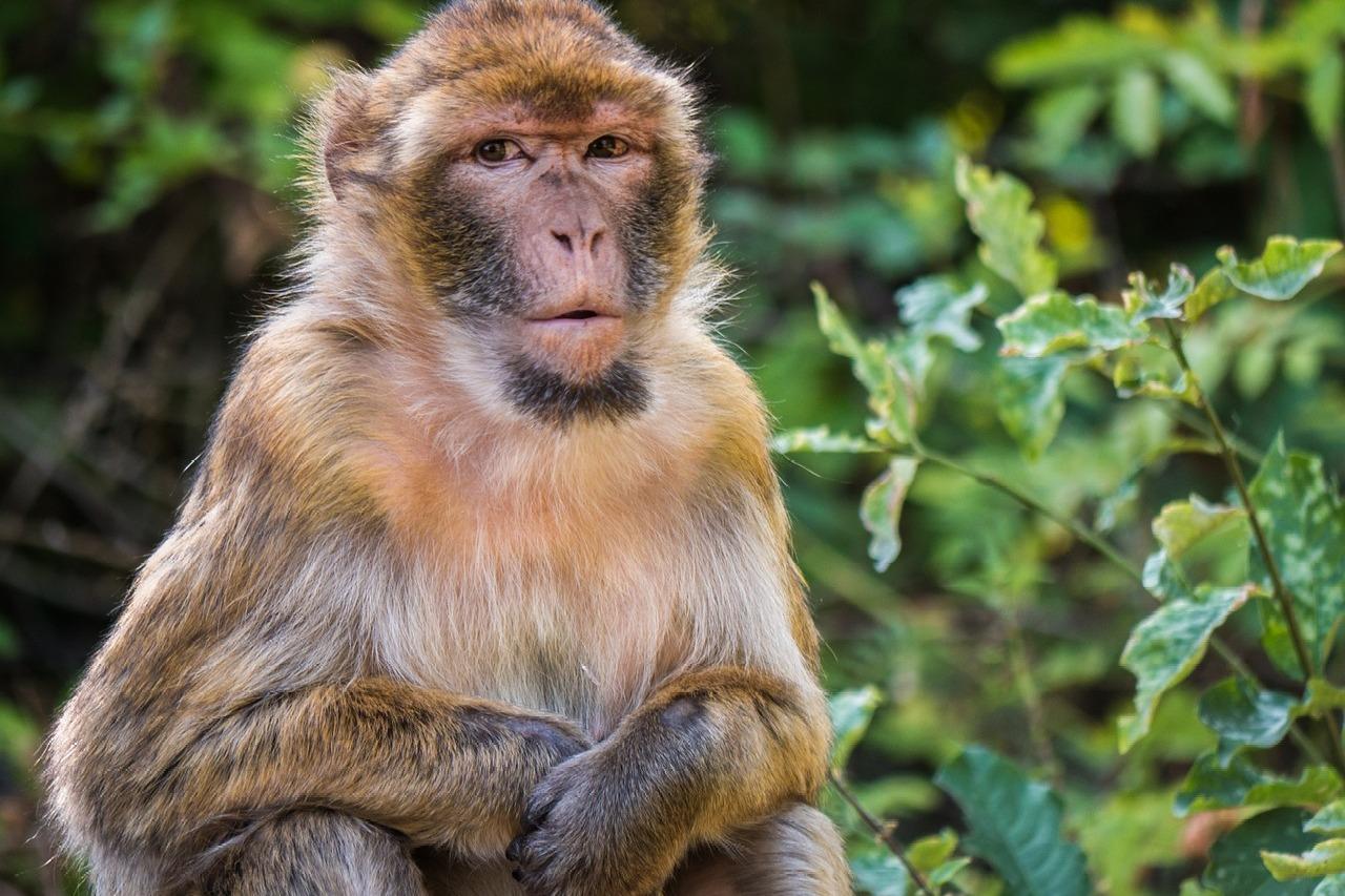 Monkey killed by villagers in khammam