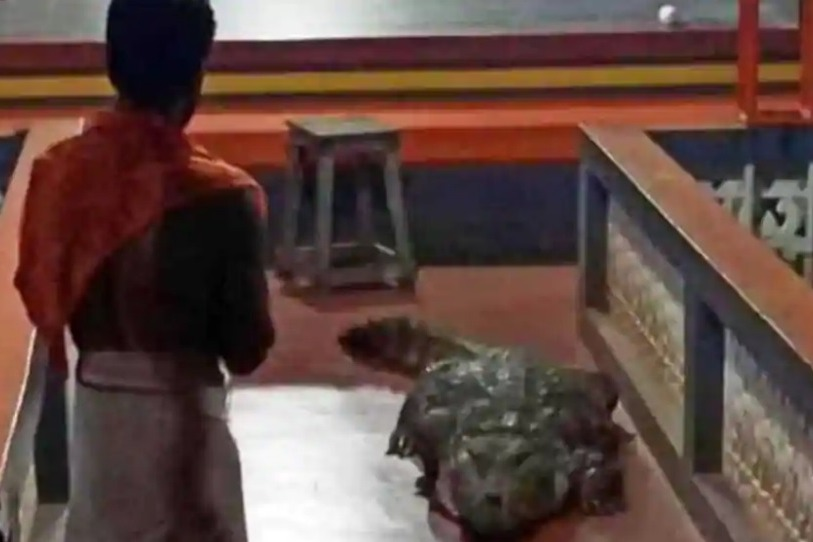 Crocodile in Kerala Temple