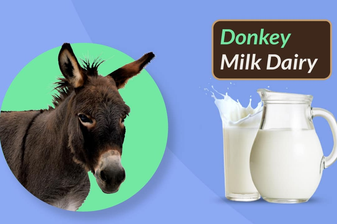 India to soon get dairy for donkey milk