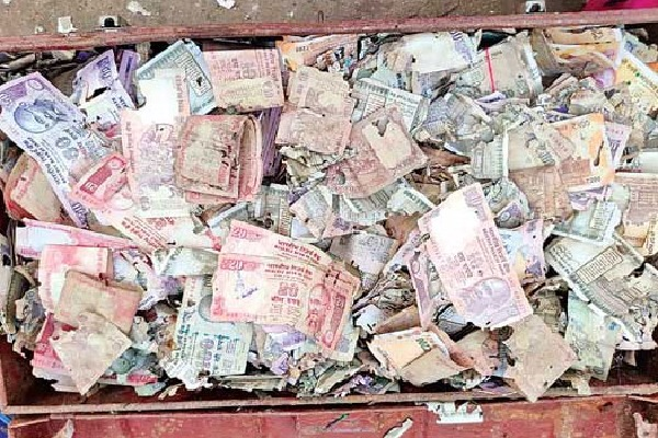 5 lakh rupees destroyed by Termites in krishna dist