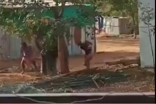 Video contains violence on Elephant got huge attention