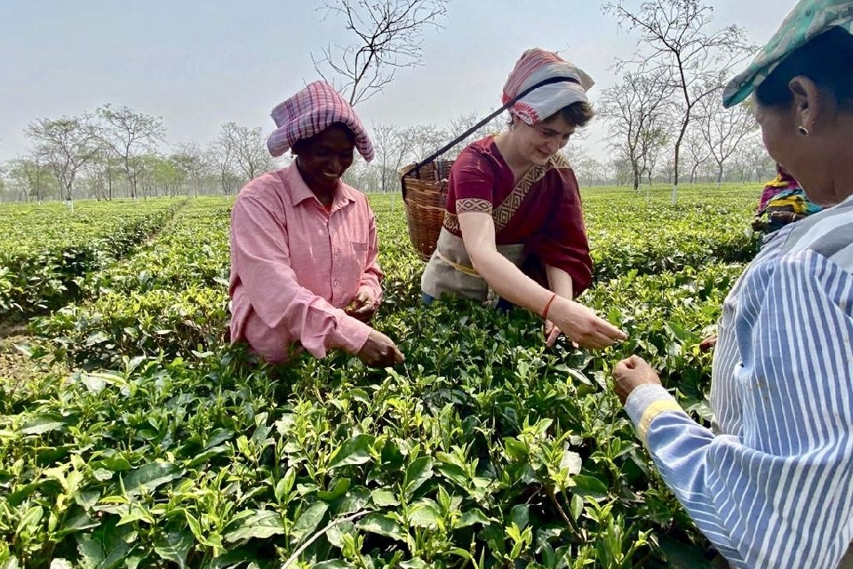 Priyanka Gandhi Plucks Tea Leaves Along with workers in Assom