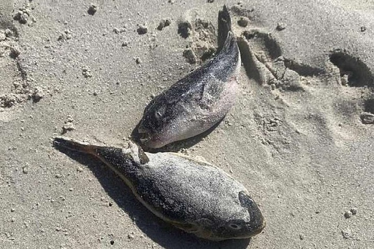 Hundreds Of Sea Creatures Deadlier Than Cyanide Found Washed Up On Beach