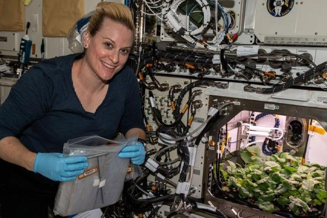 White Carrot Crop in Space Station