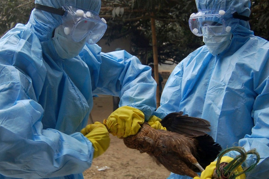 Bird flu symptoms in crows owls and pigeons says Center