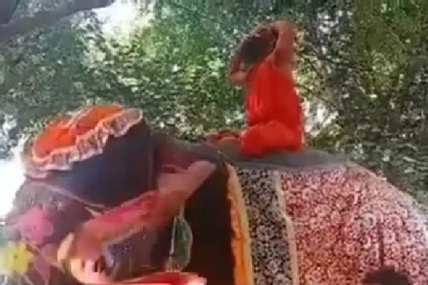 Baba Ramdev Slipped From the Elephant Video
