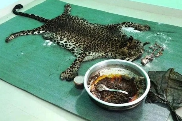 Leopard killed and cooked for a feast in Kerala
