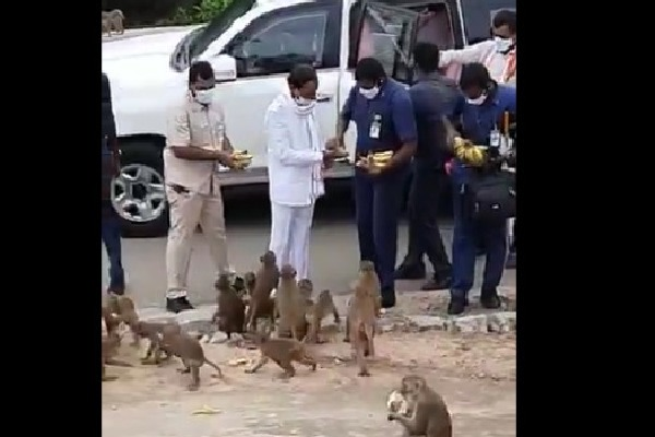 CM KCR distributes Bananas to monkeys at Yadadri shrine