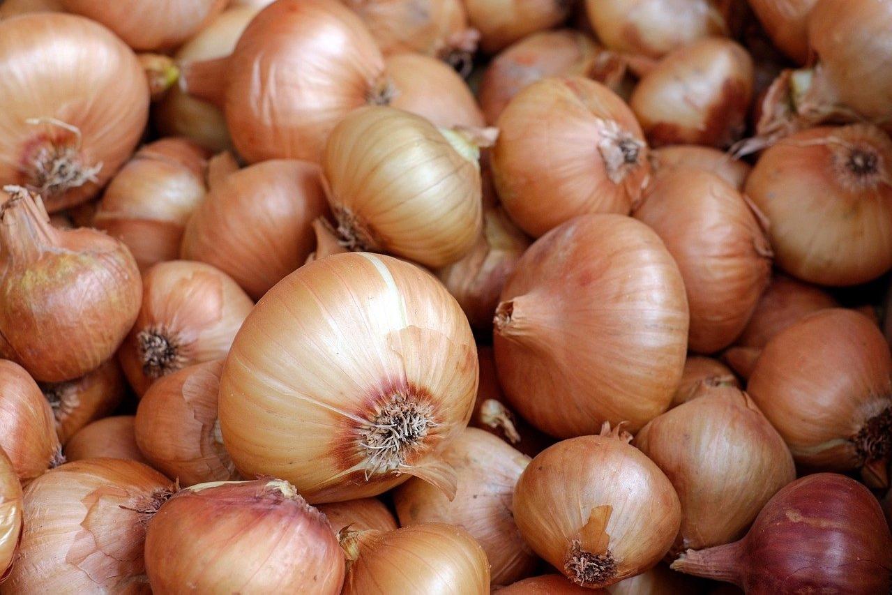 Union govt ban export of Onions
