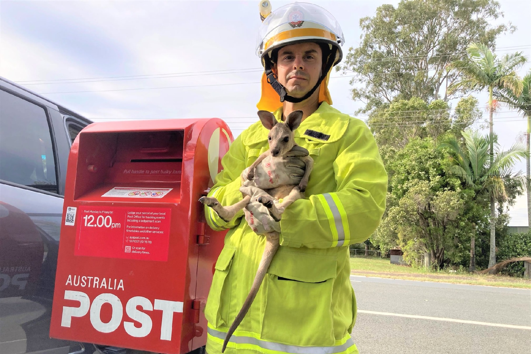 Kangaroo in postbox