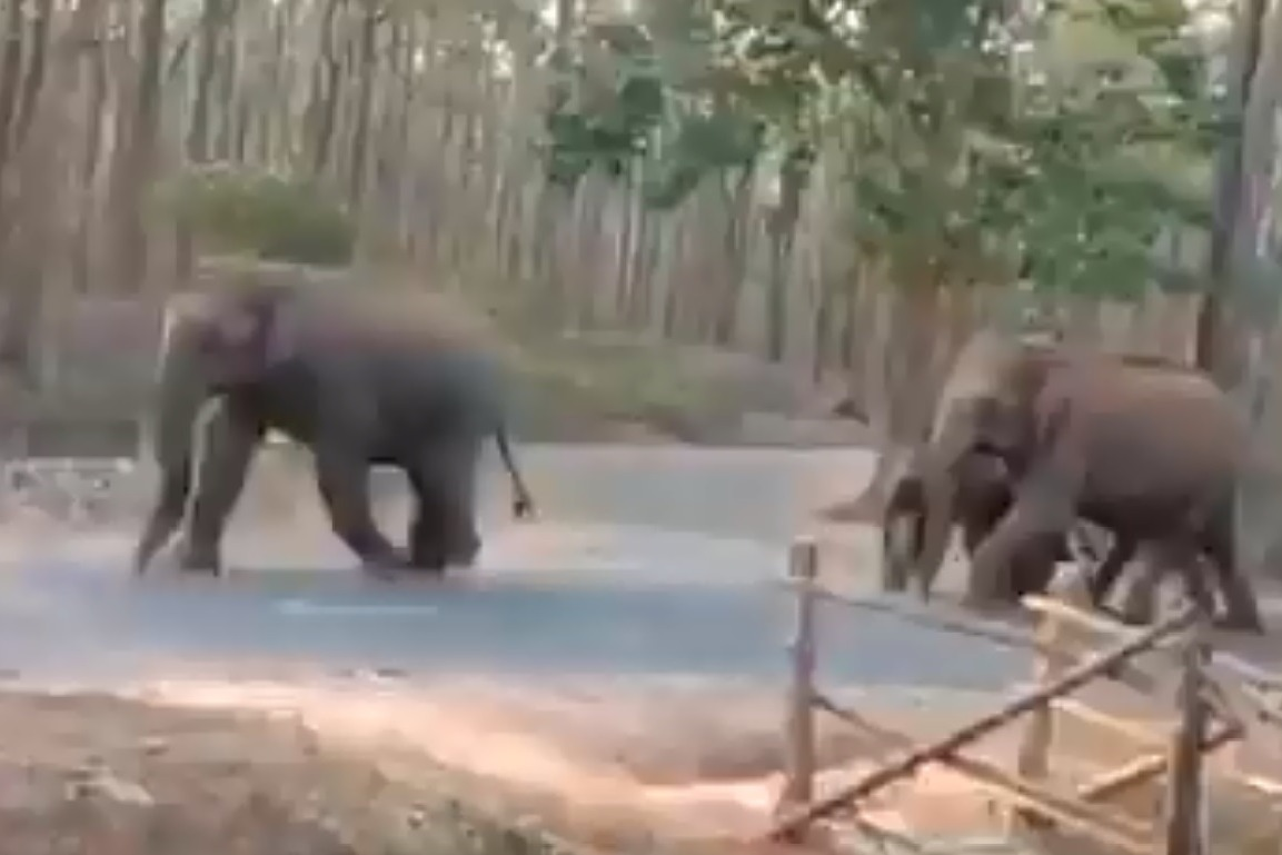 Elephants Maintaining Social Distance