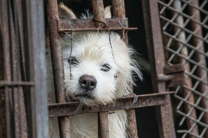 Shenzhen becomes first city in china to ban dogs cats meat