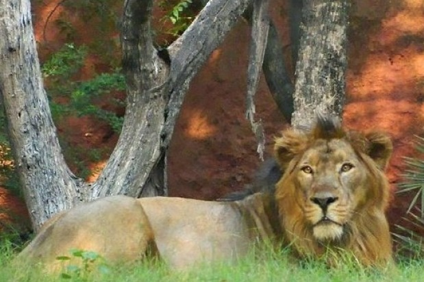 All Zoo Parks in India must take precautionary measures