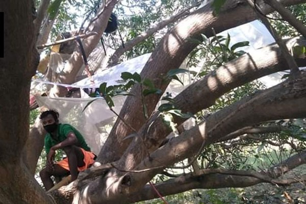 youth quarantined themselves for 14 days on a tree