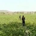 Madhya Pradesh Farmers in Budhni and Nasrullaganj of Sehore district beat