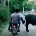 Cyberabad traffic police shares a video and quoted Newton Third Law