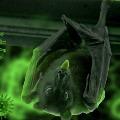 bats dies in mp