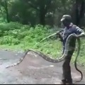 15 feet King Cobra rescued by forest officials in Tamil Nadu