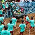 Tamilnadu people participates in Jallikattu on the eve of Pongal