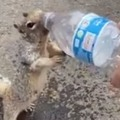 Thirsty Squiral Wants Water Viral Video