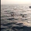 rahul gandhi swims in sea