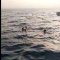 rahul gandhi swims in sea