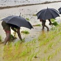 1000 farmers to file nominations from Kangeyam seat
