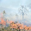 wild fire in Seshachalam forest