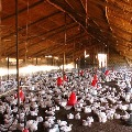 Bird Flu spreads to ten states in country