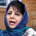 Wont fight elections till Article 370 restored says Mehbooba Mufti