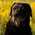 Dog to undergo DNA Test