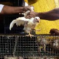 Centre says Bird Flu spreads to six states till now