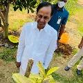 KCR planted Rudraksha sapling