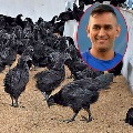 Bird flu detected in Kadaknath chickens headed for MS Dhonis farm