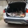 bmw luxury carrying car garbage jharkhand ranchi