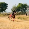 akhil video goes viral