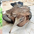 Rare snake found in karnataka and african bird in Telangana