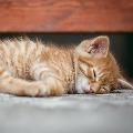 Pet cat tests positive for coronavirus in Hong Kong