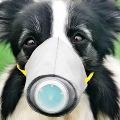 Pet Dog In Hong Kong First Case Of Human To Animal Coronavirus Transmission