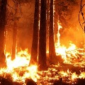 Bad news radiation spikes 16 times above normal after forest fire near Chernoby