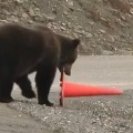 Bear Adjust Red sign Cone on Road