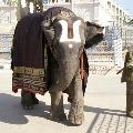 Tirumala Elephants Walking on Mada Streets