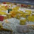 eggs on dilsukhnagar road