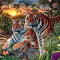Wow Many Tigers in This Picture
