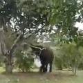 Elephant Tastes Yummy Mango video goes viral