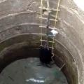 rescued two bears that had fallen in wells