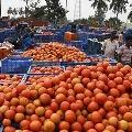 Tomato Rate Down to rupees ten for three Kilos