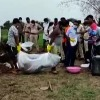 Bodies of Five Members of Tribal FamilyMissing for Weeks Exhumed from MP Farm