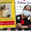 Cat missing in Hyderabad