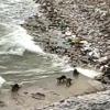 Water Dogs at Ngarjuna Sagar project